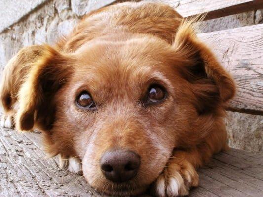 我家狗狗是佛教徒
