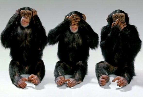 我是企业猴子