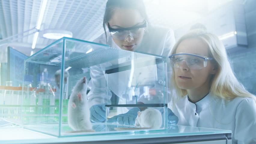 爱情科学家