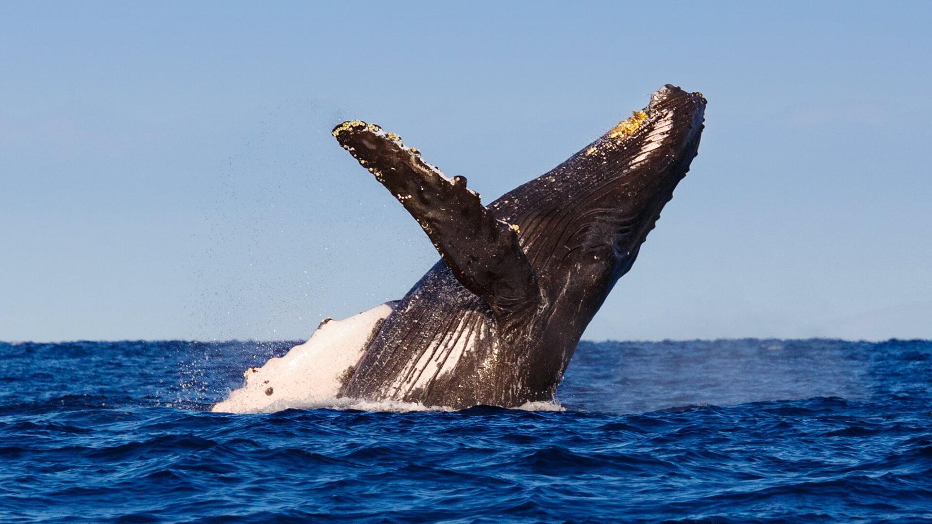 肥鲸掠水记