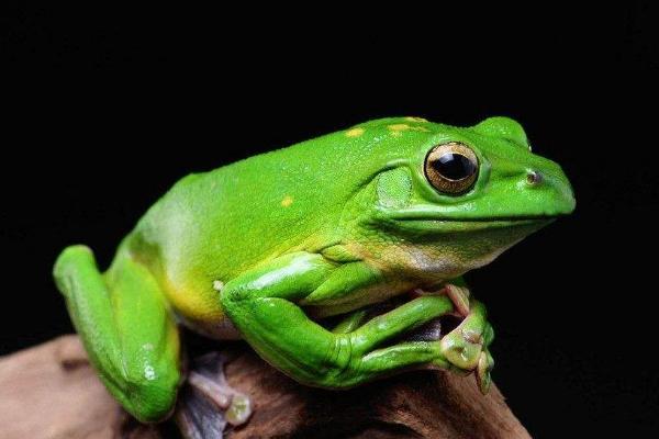 谋杀民主的政治青蛙