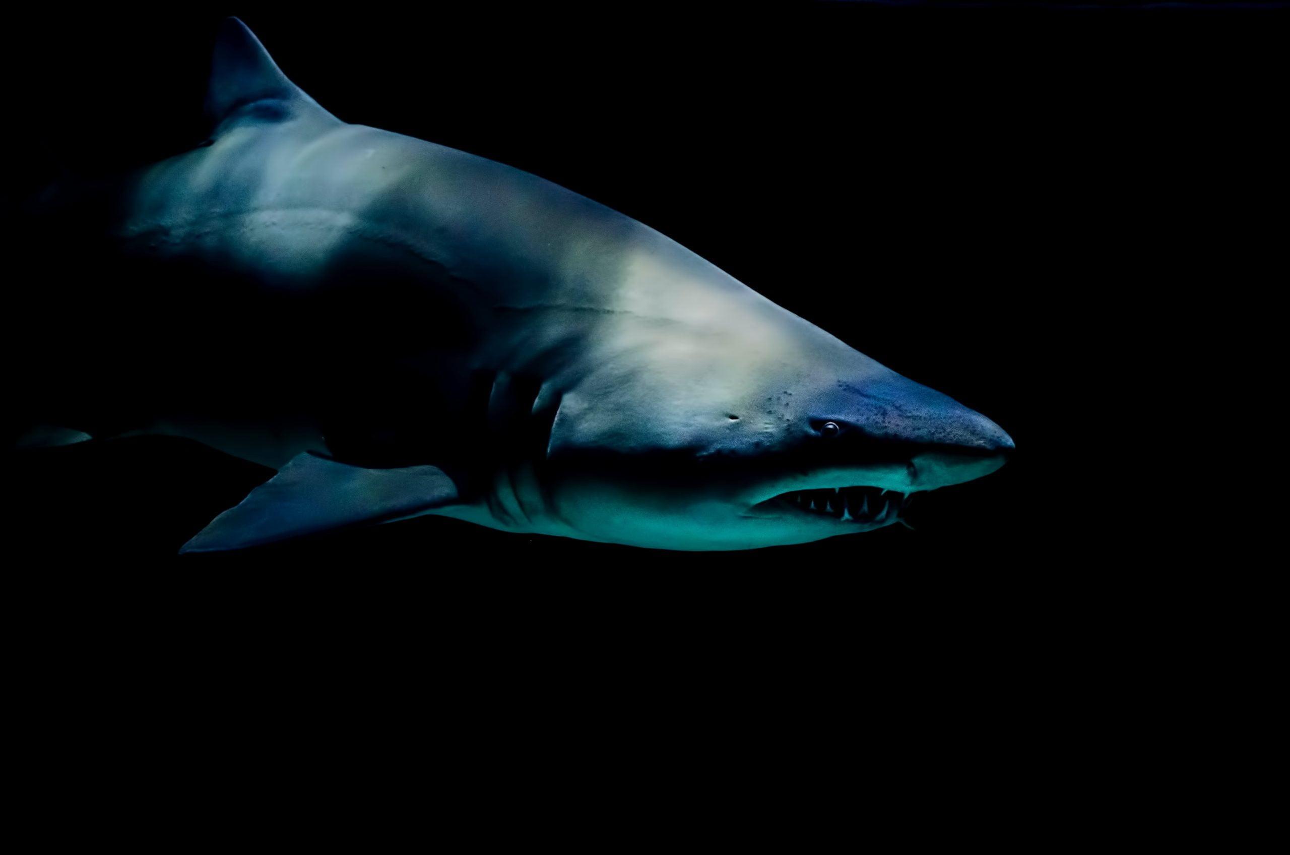 一颗史前鲨鱼的牙齿