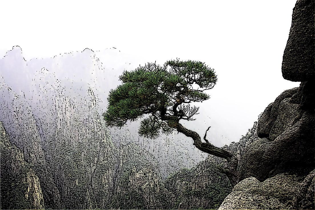 临崖迎风的松树
